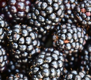 blackberries-1541314_640
